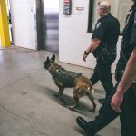 Officer Wear and K9 Odin search the building.