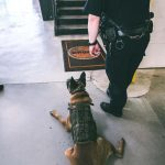 K9 Odin knows a No Drugs rug when he sees it.